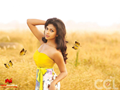 Wallpaper 1 of Amala Paul