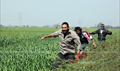 Sahi Dhandhe Galat Bande  Picture