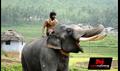 Gaja Raju Picture