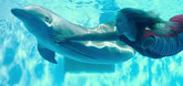 Dolphin Tale 2 Video