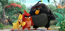 Teaser #1 - Angry Birds