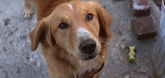 A Dog's Purpose Video