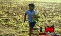 Picture 29 from the Tamil movie Nandalala