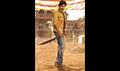 Picture 5 from the Telugu movie Gabbar Singh