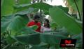Picture 26 from the Tamil movie Ariyadhavan Puriyadhavan