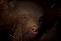 Picture 3 from the English movie Bears