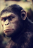 Picture 12 from the English movie Dawn of the Planet of the Apes