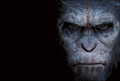 Picture 10 from the English movie Dawn of the Planet of the Apes