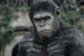Picture 2 from the English movie Dawn of the Planet of the Apes