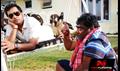 Picture 65 from the Telugu movie Dorakadu