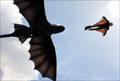 Picture 21 from the English movie How to Train Your Dragon 2
