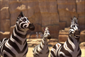 Picture 5 from the English movie Khumba