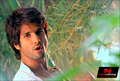 Picture 14 from the Hindi movie Phata Poster Nikla Hero