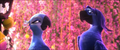 Picture 26 from the English movie Rio 2