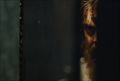 Picture 3 from the English movie Blue Ruin