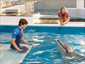Picture 5 from the English movie Dolphin Tale 2