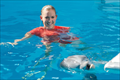Picture 2 from the English movie Dolphin Tale 2