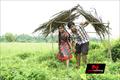 Picture 16 from the Malayalam movie Elanjikkavu P.O