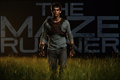 Picture 4 from the English movie The Maze Runner