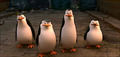 Picture 4 from the English movie Penguins of Madagascar
