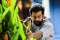 Picture 53 from the Malayalam movie Paavada