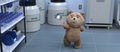 Picture 3 from the English movie Ted 2