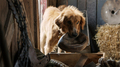 Picture 2 from the English movie A Dog's Purpose
