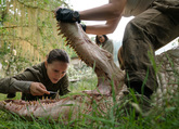 Picture 2 from the English movie Annihilation