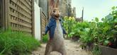 Peter Rabbit Video